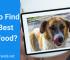 Tips to Find Best Dog Food