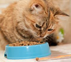 cat food toppings