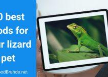 10 Best Lizard Foods – Lizard feeding guide 2021