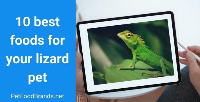 Best Lizard food