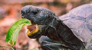Best food for pet turtle