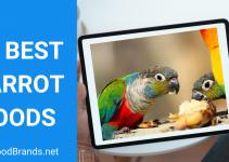 Best Parrot Food – Parrot Food guide 2021