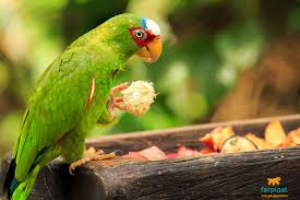 Best Food for parrot