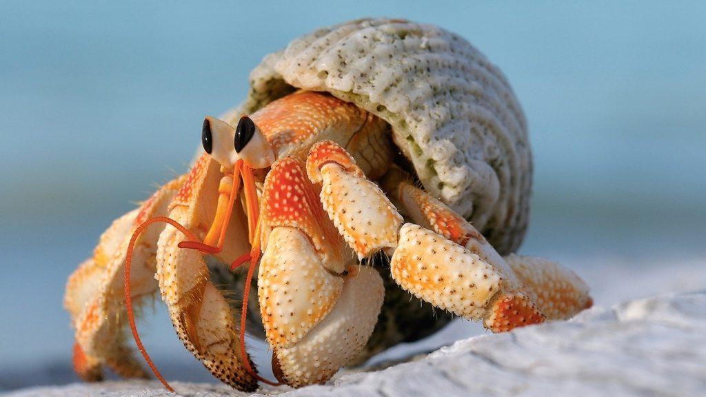 best hermit crab food