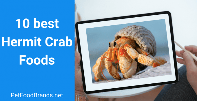 Best Hermit Crab Foods – 10 Foods Reviewed and FAQs (2021)
