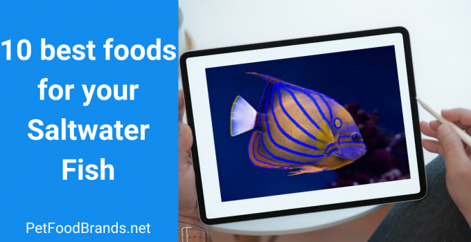 Best food for saltwater fish