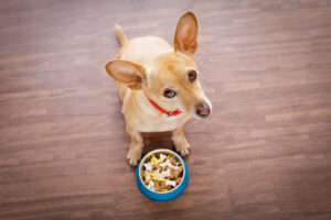 Veterinary diet dog food