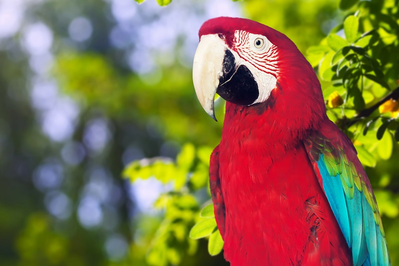 Best food for your parrot