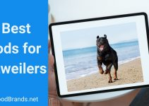 Best dog food for Rottweiler