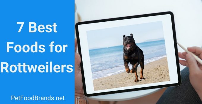 Best dog food for Rottweiler – Are you feeding junk?