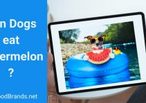 Can dogs eat watermelon? Are seeds and rind safe?