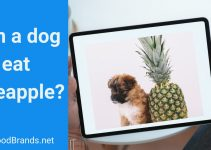 Can a dog eat pineapple? Is it too sweet?