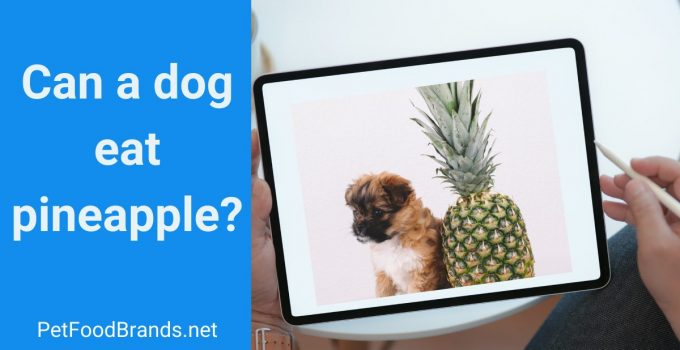Can a dog eat pineapple
