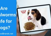 can dogs eat mealworms