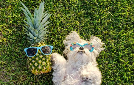 Is pineapple safe for dog?