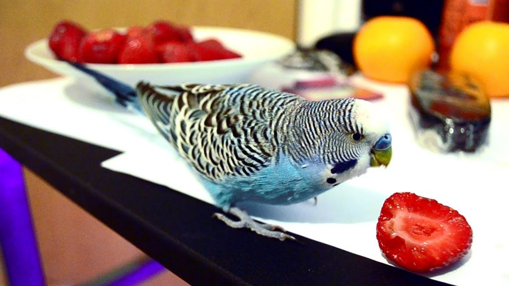 CAN PARROTS EAT STRAWBERRIES