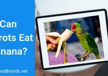 Can parrots eat bananas? Is Banana peel safe?