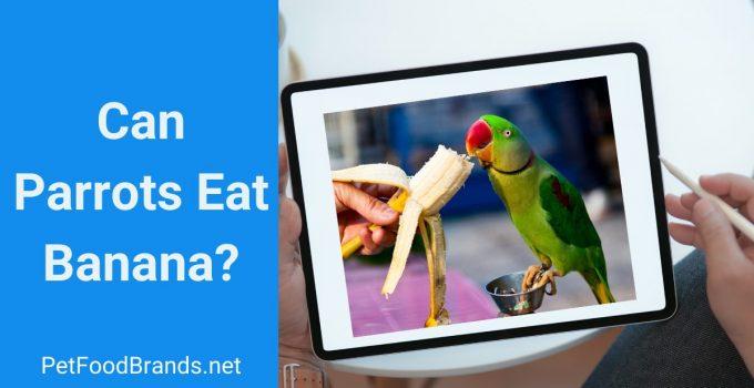 Can Parrots Eat Banana