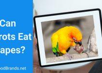 Can Parrots Eat Grapes
