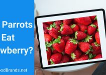 Can Parrots Eat strawberry