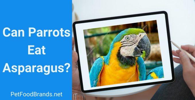 Can Parrots have Asparagus