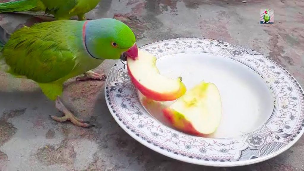 is apple safe for my parrot