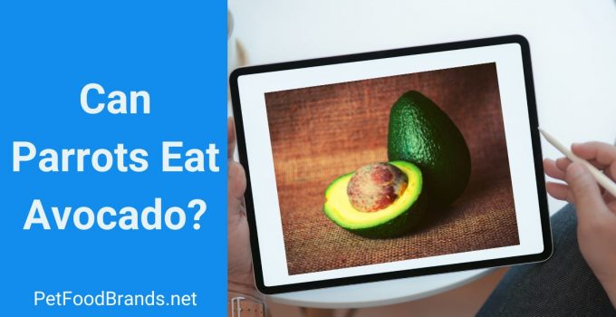 is avocado safe for parrots