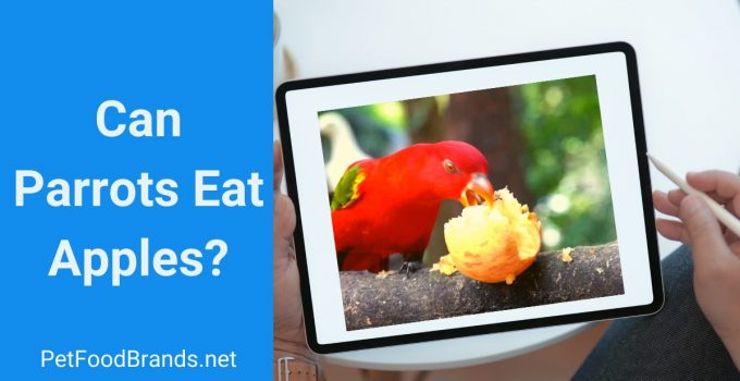 parrot eating apple. Is it safe