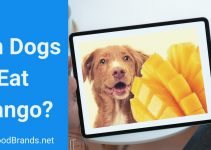 Can dogs eat mango? (Fruit, skin, and seed)