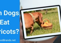 Can Dogs Eat Apricots? Jam, seeds, and yogurt