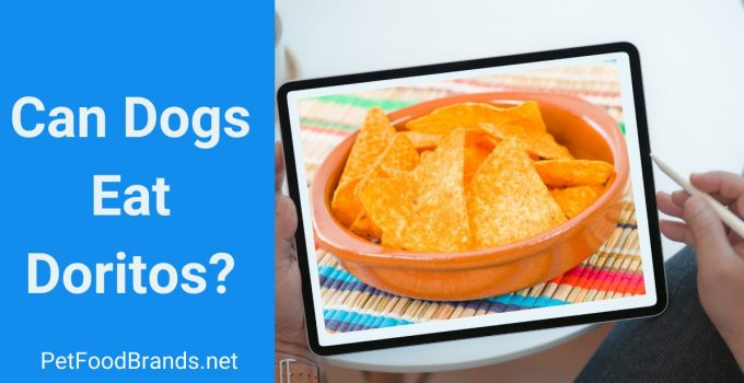 Can dogs eat Doritos?