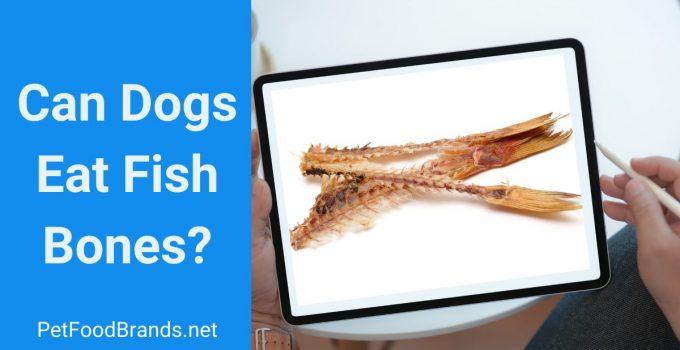 Can Dogs Eat Fish Bones?
