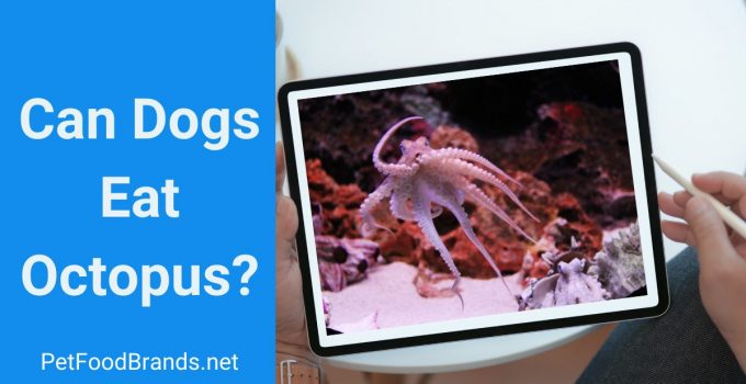 Can dogs eat Octopus? Is it harmful?