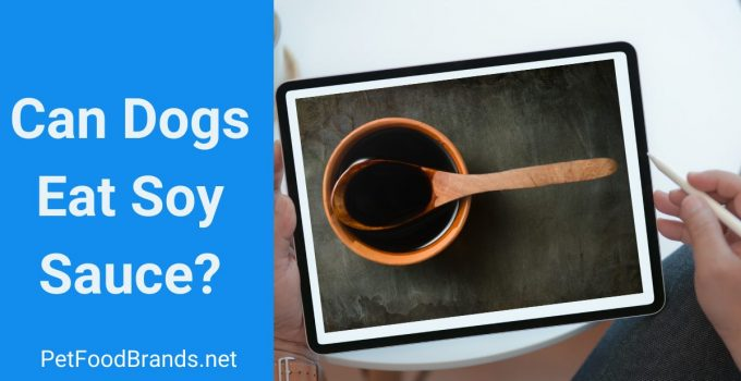 Can dogs eat Soy Sauce?