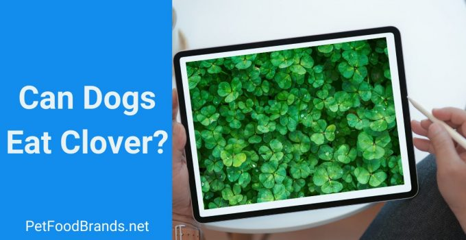 Can dogs eat clover?