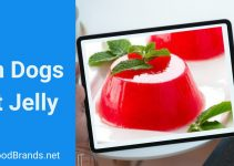 Can dogs eat jelly