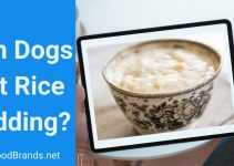 Can dogs eat rice pudding