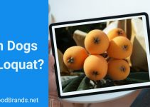 Can dogs eat loquat?