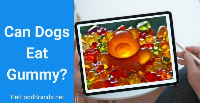Can Dogs Eat Gummy?