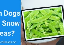 Can dogs eat Snow Peas? Are they Nutritious?